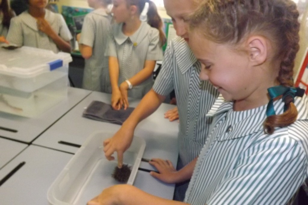 Clayfield College students interacting with marine life