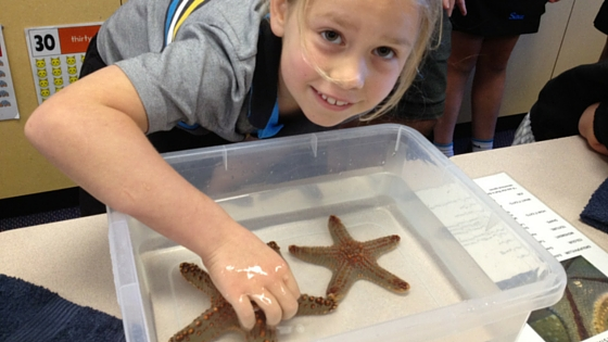 science week ocean life
