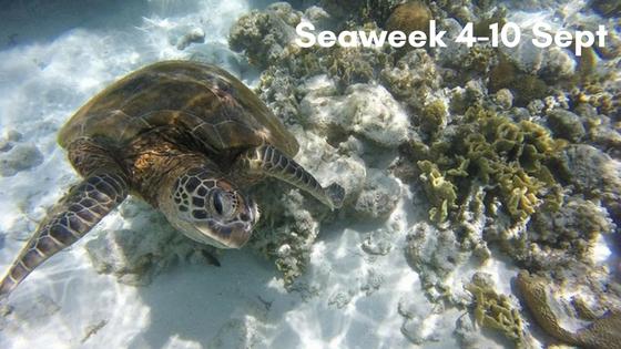 Seaweek 4-10 Sept