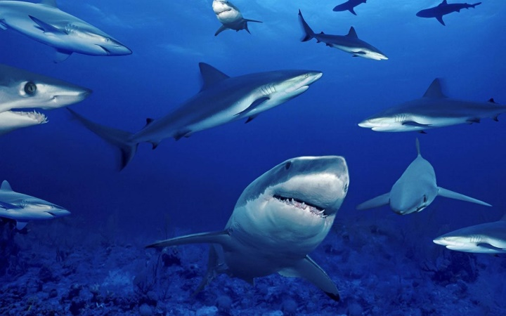 Sharks Facts Quiz