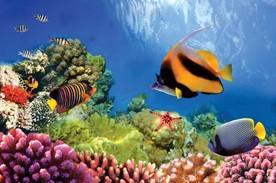 Habitats Reef