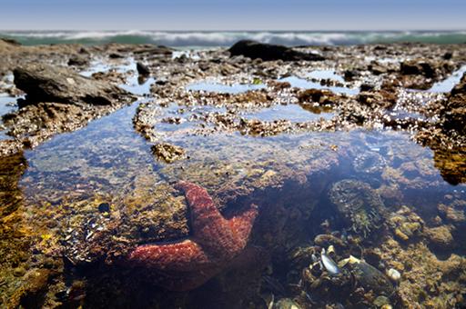 Coastal Habitats