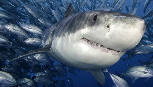 ONLINE SHARKS COURSE