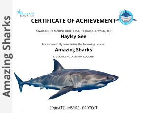 Amazing Sharks Certificate
