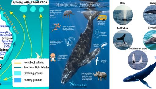 whale migration course