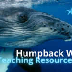 Humpback Whale Teaching Resources