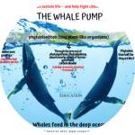 humpback teaching resources