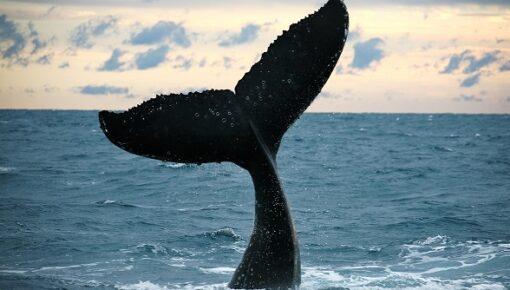 East Coast Whales