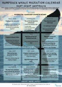 Humpback Migration Calendar