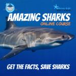 amazing sharks kids course