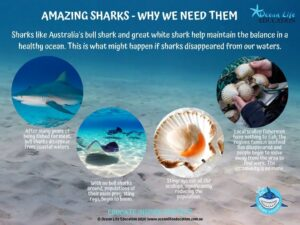 why we need sharks