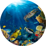 shark ecosystem